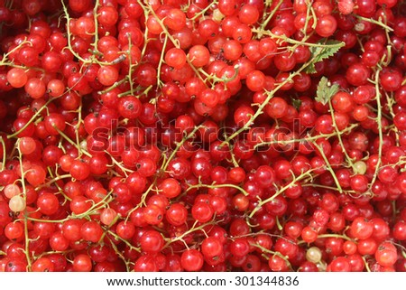 Background of ripe juicy fresh red currant berries - stock photo
