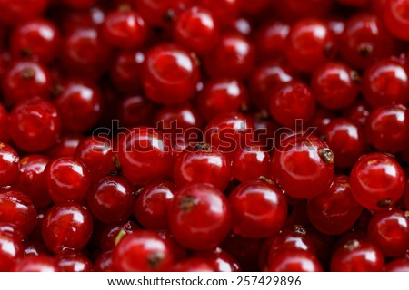 Background of ripe juicy red currant berries - stock photo