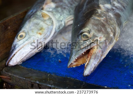 Background of sea fish heads on fish market in Vietnam - stock photo