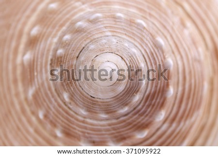 background of sea snail seashell  , close up. - stock photo