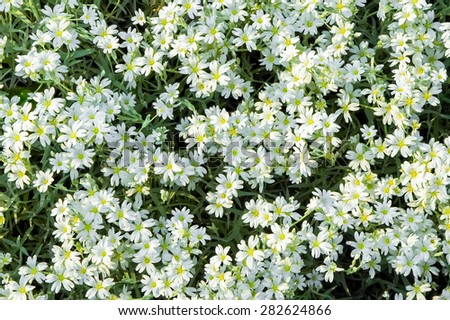 background of small white and yellow flowers - stock photo
