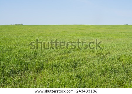 Background of summer Meadow with green fresh grass field and blue sky with light good weather clouds on Warm weather nature backdrop with trees - stock photo