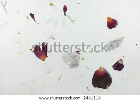 Background of textured paper containing pressed flower petals. - stock photo