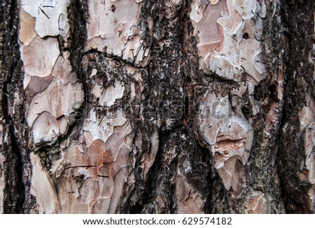 Background of the bark of a tree.