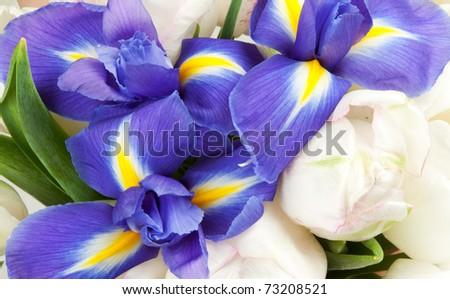 background of the irises and white tulips - stock photo