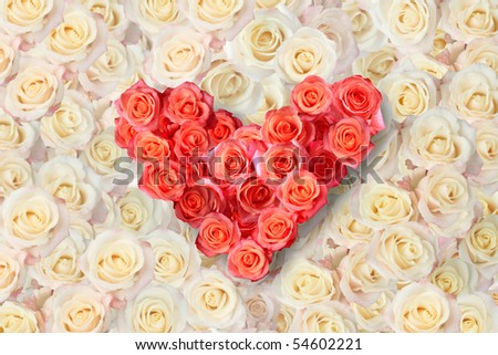background of the many roses (wedding, the day of St. Valentine) - stock photo