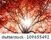 Background of the tree autumn. - stock vector