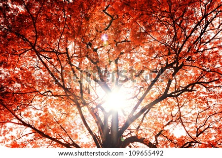 Background of the tree autumn. - stock photo