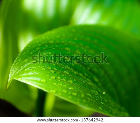 background of the water drops on a green leaf - stock photo