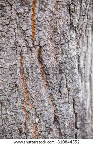 Background of   tree bark - stock photo