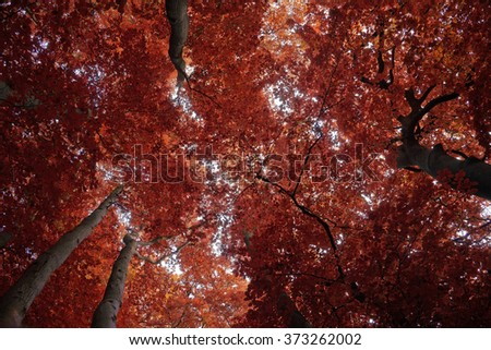 Background of tree in autumn beech forest - stock photo