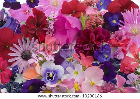 background of various flowers heads - stock photo