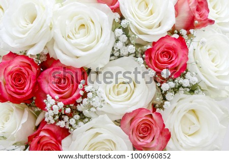 Background of white and pink roses