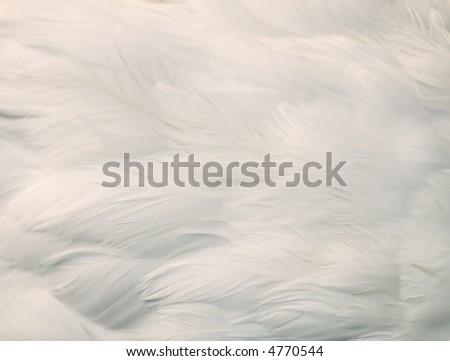 background of white feathers - stock photo