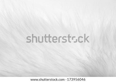 background of white fur - stock photo