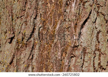 Background of willow tree bark - stock photo