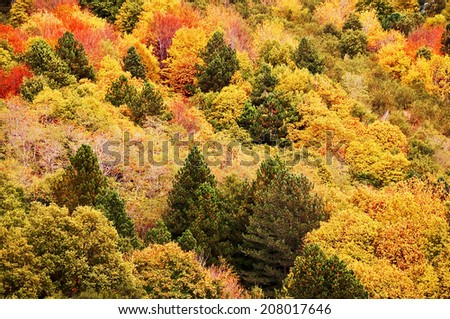 Background of yellow and orange trees in autumn in a forest - stock photo