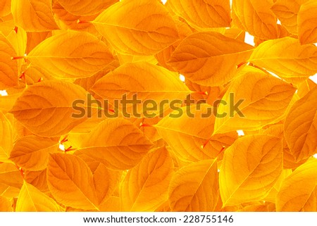 Background of yellow autumn leaves. - stock photo
