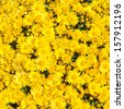 background of yellow flowers - stock photo