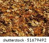 Background, or possible pattern for camouflage hunting clothing - stock photo