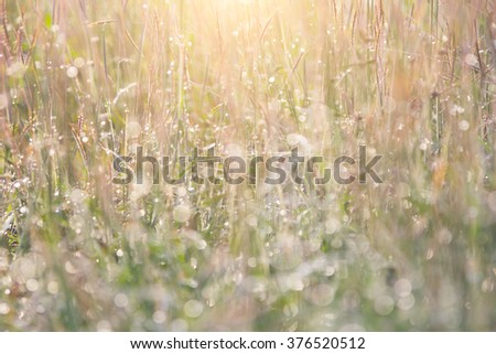 Background or wallpaper or view of pastures. selective focus , sweet and warm color tone , poor lighting from sunlight on top - stock photo