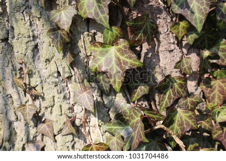 Background pattern with bark and ivy