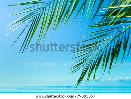 Background Peace Palm - stock photo
