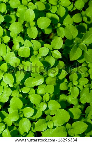 Background photo of clover