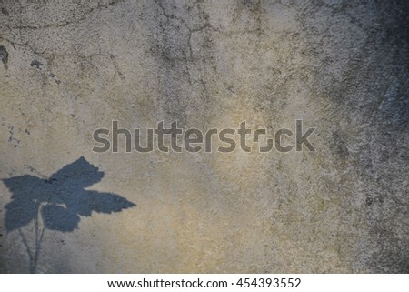 Background - plastered surface of the wall with the shadow of the plant