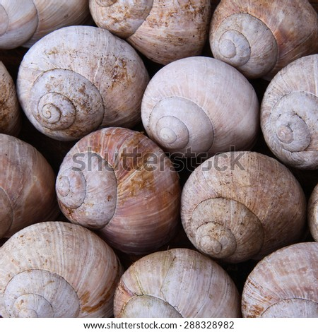 background snail shells - stock photo