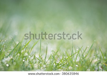 background sparkling grass lawn raindrops dewdrops with shallow depth of field and copy space - stock photo