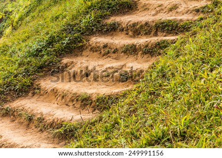 Background stairs ground and grass, which is used for the smooth elegance. - stock photo