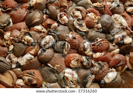 Background texture of Atlantic sea snail meat - stock photo