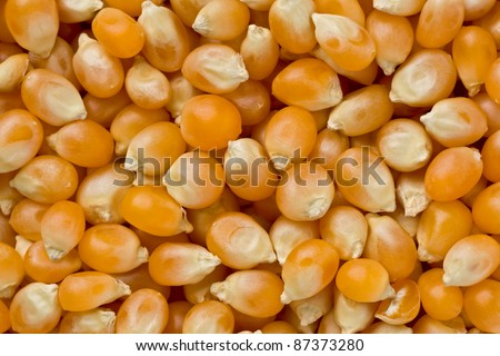 Background texture of several un-popped popcorn kernels.