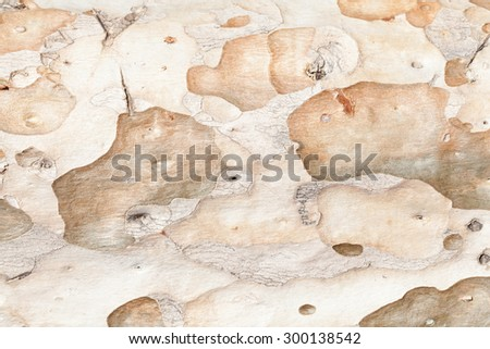 Background texture of tree bark. Skin the bark of a tree that traces cracking. - stock photo