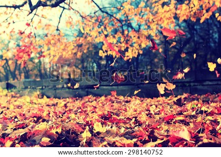 background texture of yellow leaves autumn leaf background