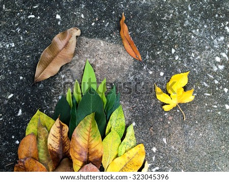 background texture of yellow leaves autumn leaf background. on dark background. - stock photo