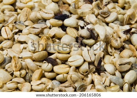 Background texture or fresh raw dried coffee beans to be roasted and ground and used as ingredient in brewing filter and espresso coffee - stock photo