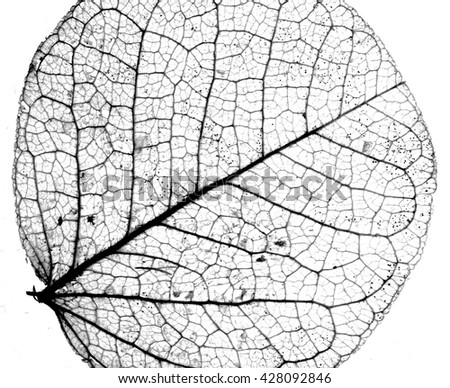 Background textured image made of delicate leaf veins - stock photo