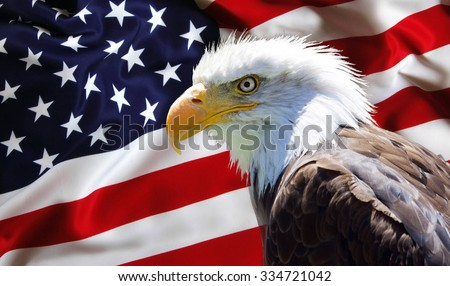 Background, wallpaper - North American Bald Eagle on american flag - stock photo