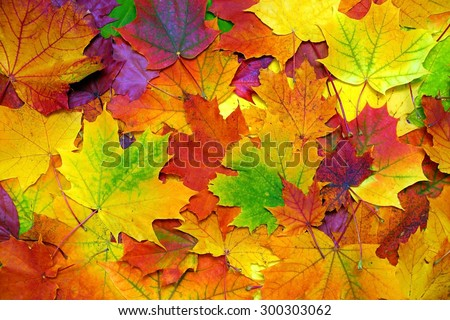 background with autumn colorful leaves