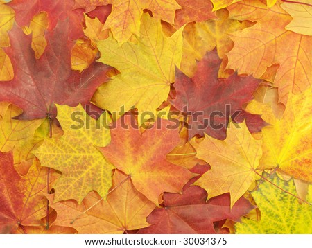 Background with autumn leaves on the earth