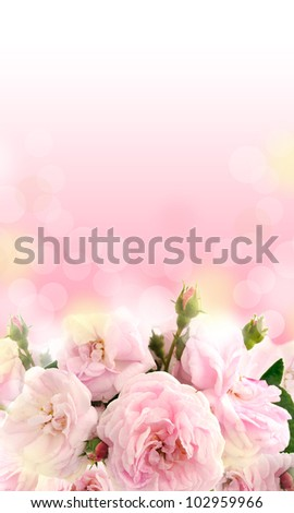 Background with beautiful rose - stock photo
