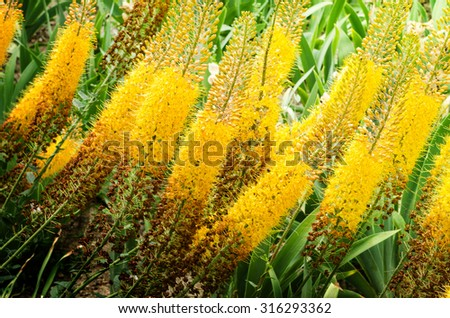 background with beautiful yellow flowers - stock photo