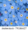 background with blue forget-me-not flowers - stock photo