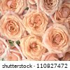 Background with bright orange and pink roses - stock photo