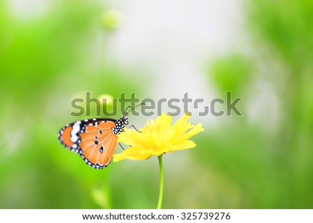 Background with butterflies and yellow flowers featured component. By dissolving backdrop Or blurring in whole or in part.