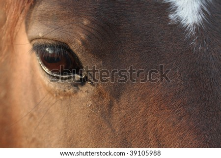 Background with closeup of nice brown horse's head - stock photo