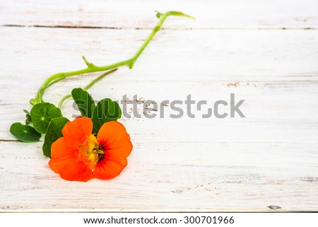 Background with flower of nasturtium isolated on white wood background useful as greeting card,wedding invitation, mothers day or invitations card. - stock photo