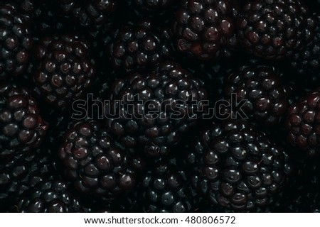Background with fresh blackberry fruits macro